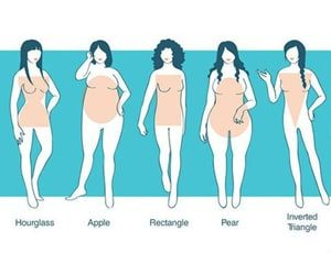 different body types on white background