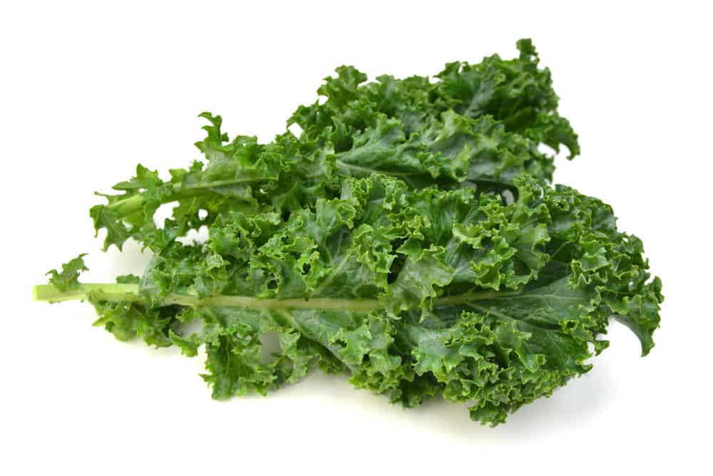 Kale leafs on white background.